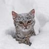 Kuk sneh macka